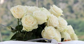 Rose blanche signification